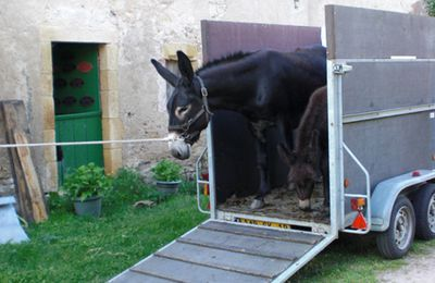 Foire aux ânes de Lignières: la fin de l'aventure