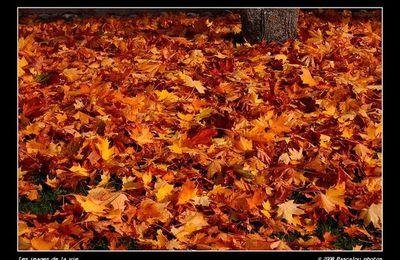 124° Tapis de feuilles mortes