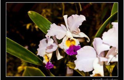 301° Orchidée