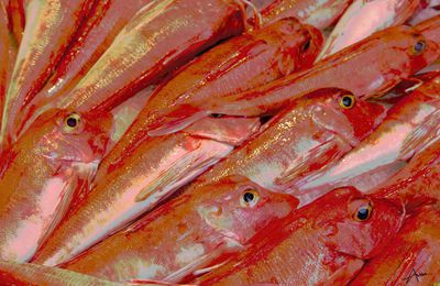 poisson rouges ..