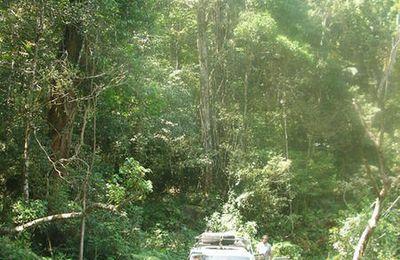 Ranomafana du Sud la route des épices