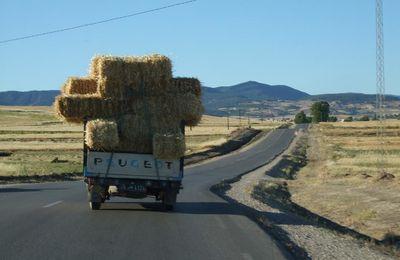 Sur la route de Tabarka
