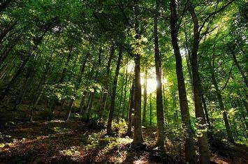 Du vert pour l'espoir