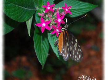 Le jardin des papillons...