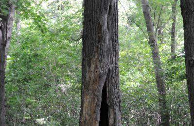 La photo du mois de septembre 2011 - Promenons-nous dans les bois