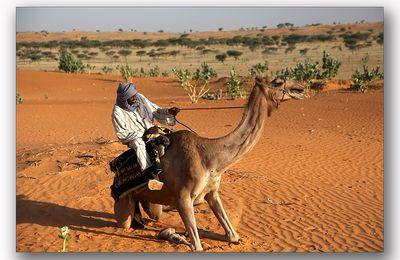 Omar et le chameau