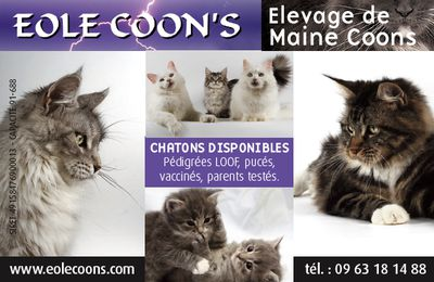 Chatterie Eole Coon's