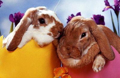 Les lapins de Pâques ont toujours la côte