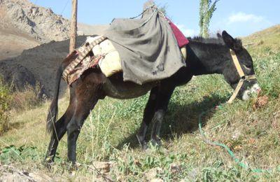 Tadjikistan : de Korog aux Monts Fan