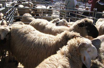 La foire aux moutons de Servoz.