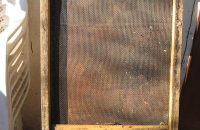 Piso sanitario para el control de varroa.