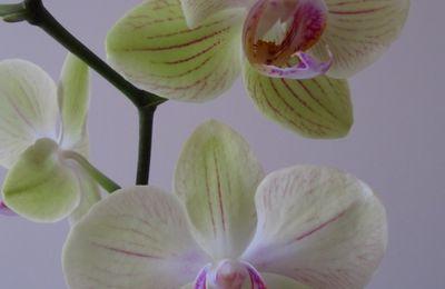 Comment naquit l'orchidée.