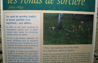 Les ronds de sorcière, musée du Champignon