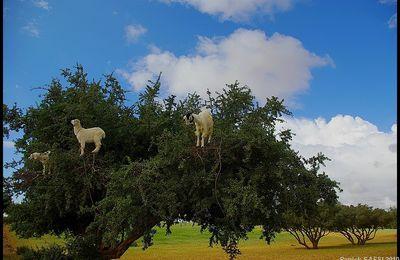 Sur la route entre Marrakech et Essaouira