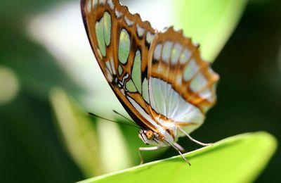 Le jardin des papillons (11),