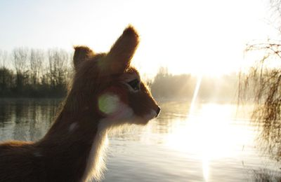 Inspiration hivernale: Morning mist and my sweet Bambi