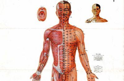 Puntos anatomicos de acupuntura