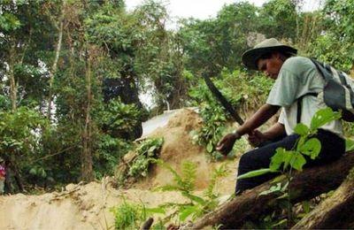 BOLIVIE : ¡ EVO MENTIROSO ! Dans le PARQUE MACHÍA comme ailleurs tes cocaleros sont de grands destructeurs de la Madre Tierra !