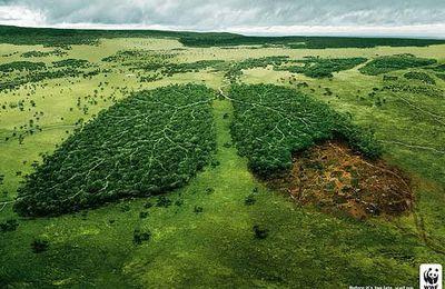 Consecuencias de la lluvia acida en el ecosistema