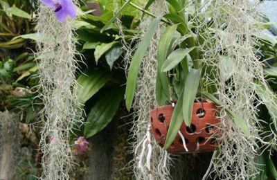 La culture des orchidées