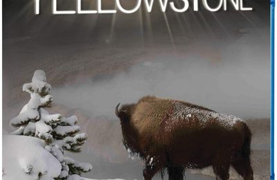 Yellowstone en blu-ray
