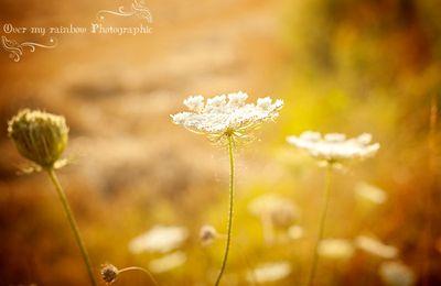 Dans le champ de blé...