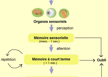 MEMOIRE:Perspective structurale vs perspective fonctionnelle