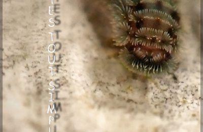 Minuscule arthropode