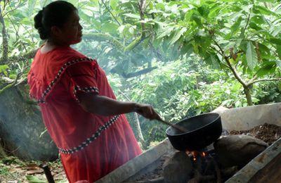 Le cacao de Panama, source de commerce équitable pour les indiens Ngäbé Buglé (2ème partie)