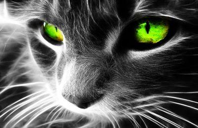 Paroles de chaton. message du 23-08-11