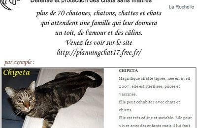 Planning-Chat : adoptez CHIPETA