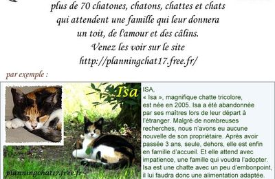 Planning-Chat : adoptez ISA
