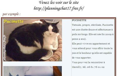 Planning-Chat : adoptez PUCINETTE