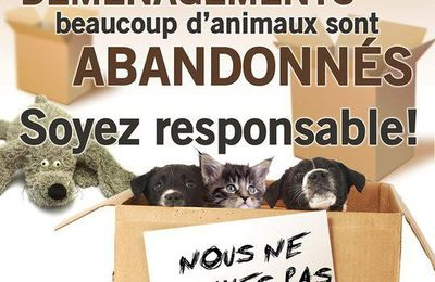 Animaux : l'été approche : ATTENTION !!!!