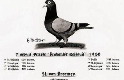 L'As pigeon est-il aussi le meilleur reproducteur?