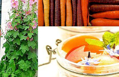 La cuisine d'Isa-Marie, fraîcheur, couleur et bonheur !
