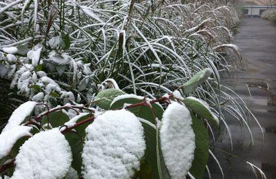 1ere neige de l'annee