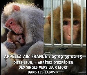 Scandale pour AIR FRANCE