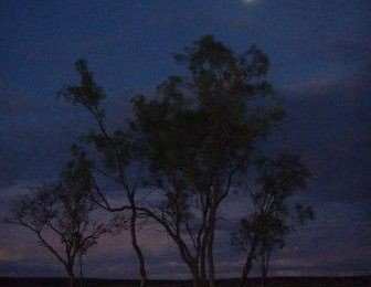 Night under stars australian bush