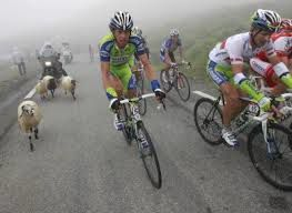 Moutons participants : Tour de France