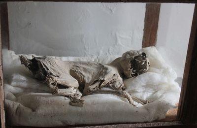 L'IMAGINARIUS Hors-série N°1 sur les momies est en ligne