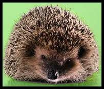 The Decline of British Hedgehogs