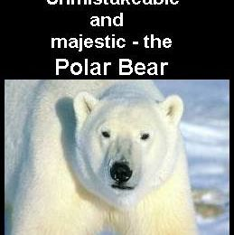 Polar Bears are threatened by Climate Changes