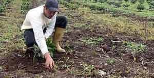 Cuba avanza nella consegna di terre oziose in usufrutto