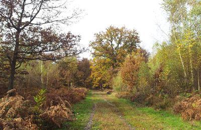 Foret de Sénart, automne