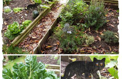 Le potager du Chat Vert : Octobre 2013