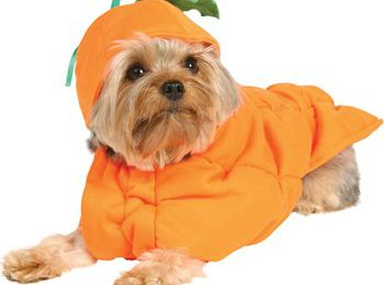 Halloween Pet Costumes: Dress them up for the party
