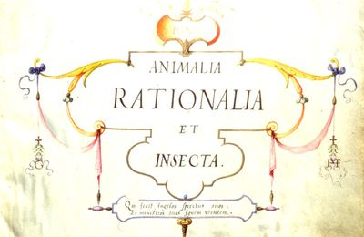 Traduction et origines des inscriptions figurant dans Animalia rationalia et insecta (Ignis) de Joris Hoefnagel, 1575-1582.