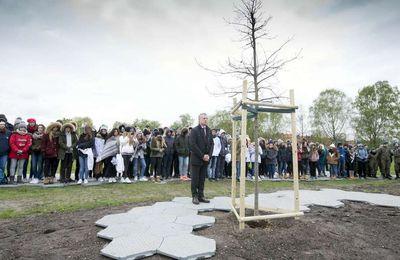 Pays basque : un descendant du chêne de Guernica planté à Auschwitz
