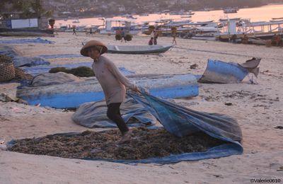 Nusa Lembogan, l'ile aux algues